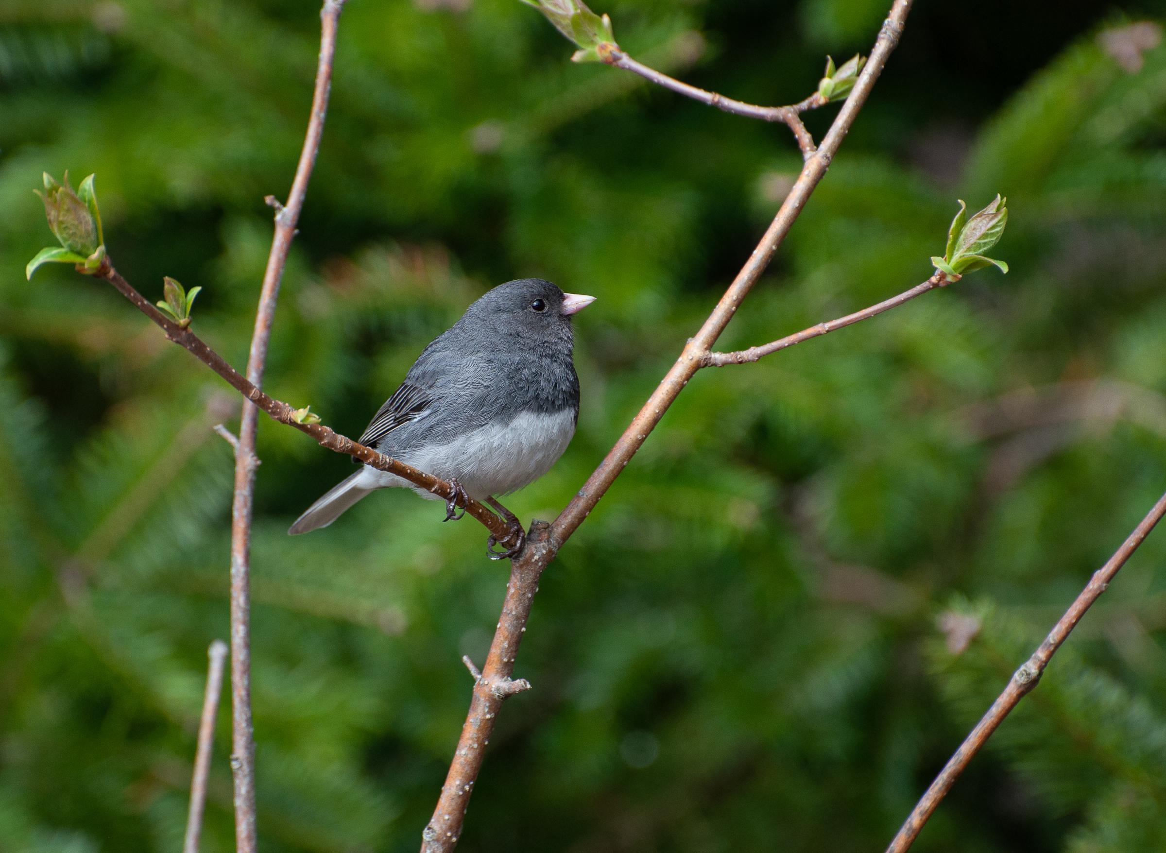 Bird-1