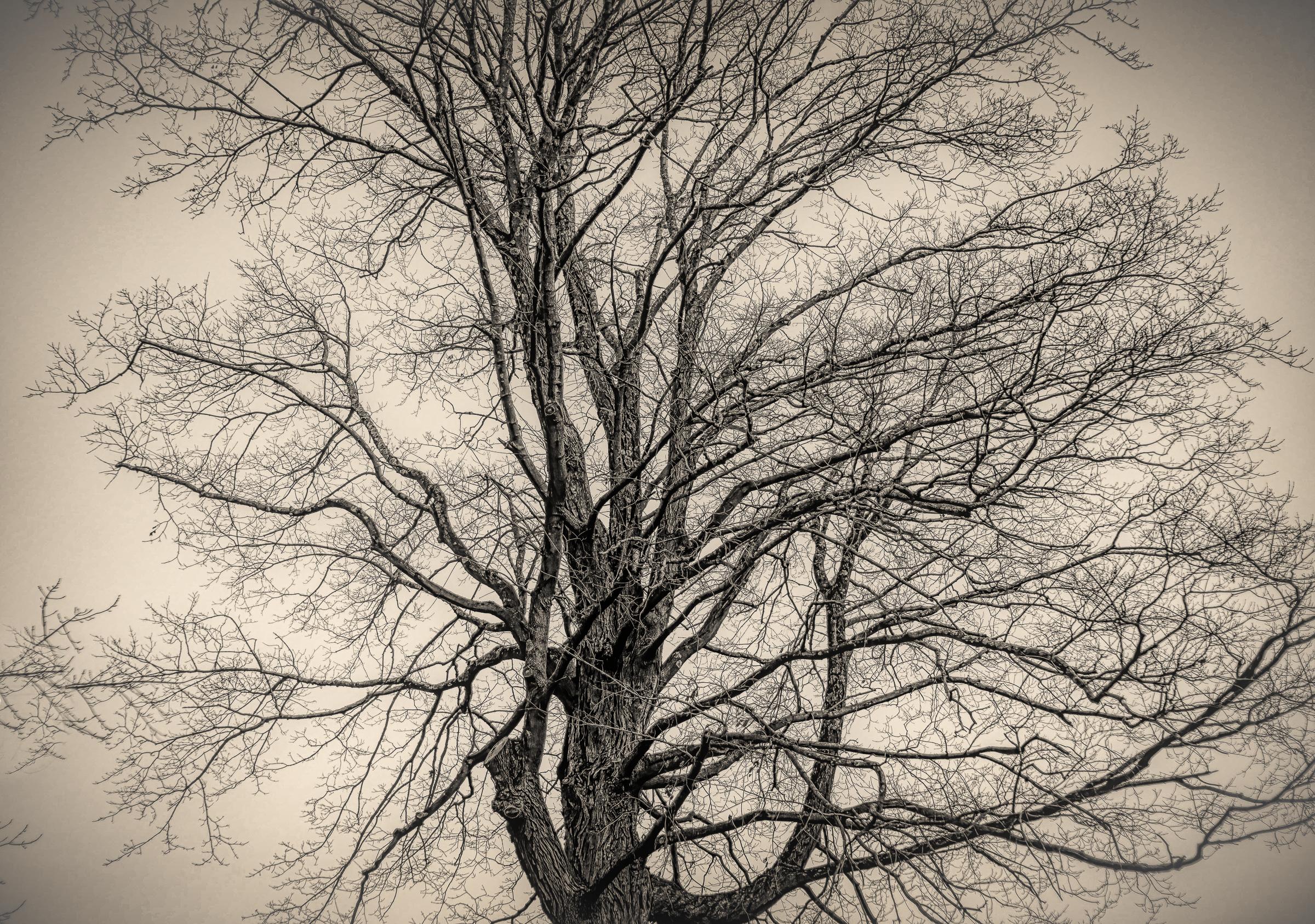 Tree-Against-Gray-Sky
