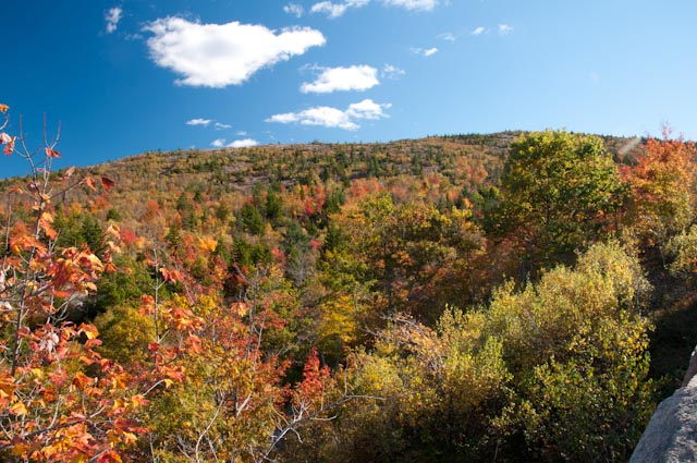 Fall foliage with a circular polarizer