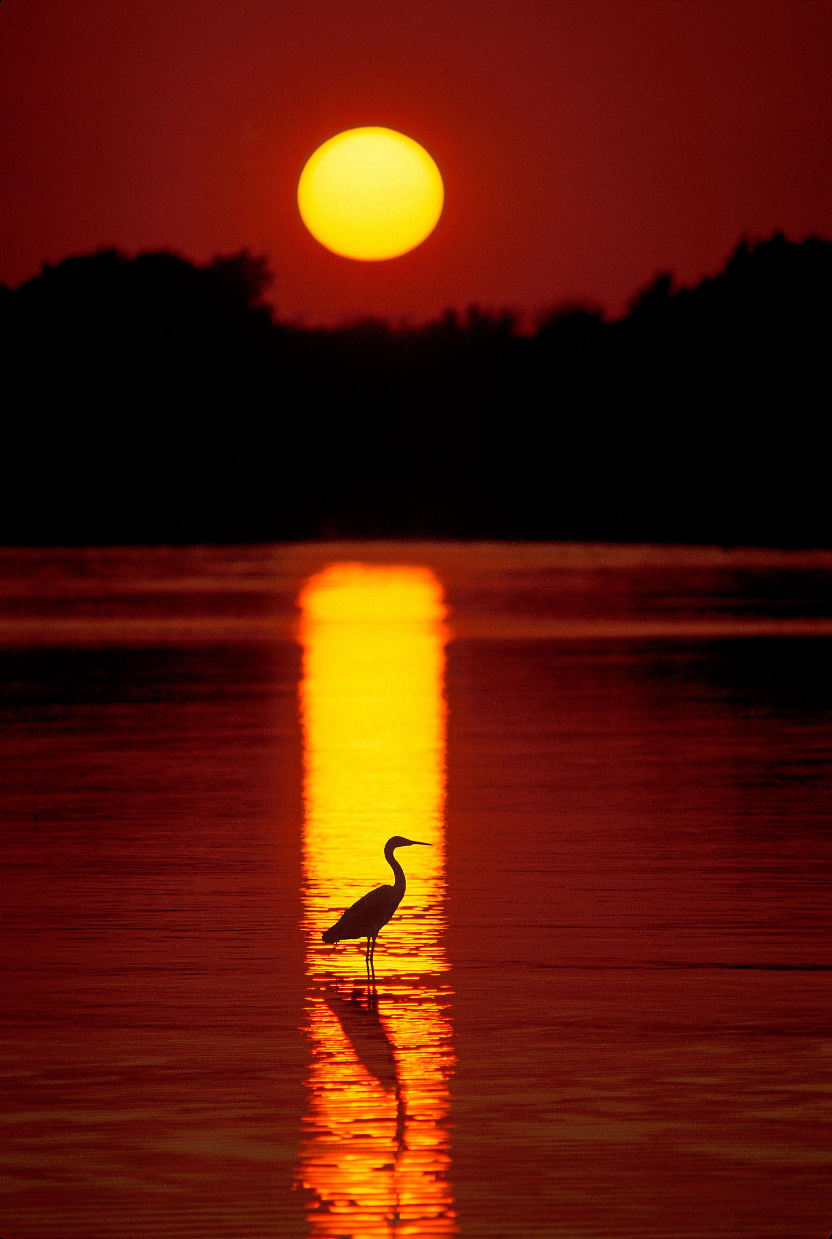 4B-Outdoors-heron-in-lagoon