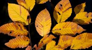 fall-foliage-jwt